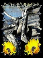 Kvety_a_drevo