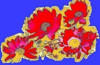 Zlte_kvety_na_cerveno