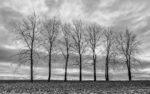 medzi stromami 1